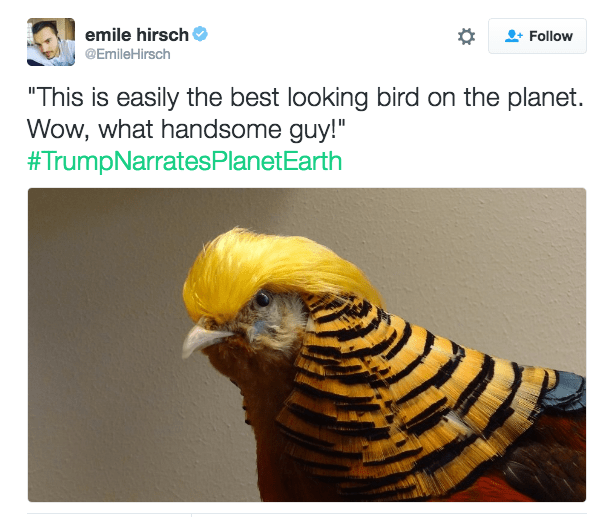"""Product - emile hirsch Follow @EmileHirsch """"This is easily the best looking bird on the planet. Wow, what handsome guy!"""" #TrumpNarratesPlanet Earth"""