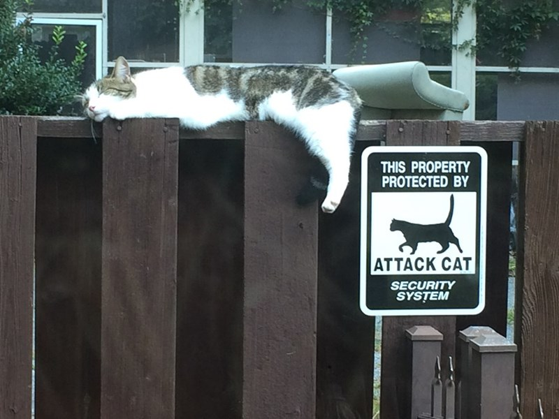 sign security Cats - 8990480896