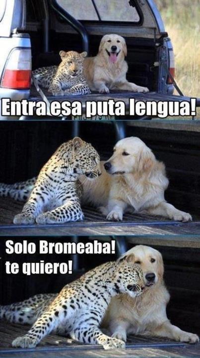 bromas Memes animales - 8990487808