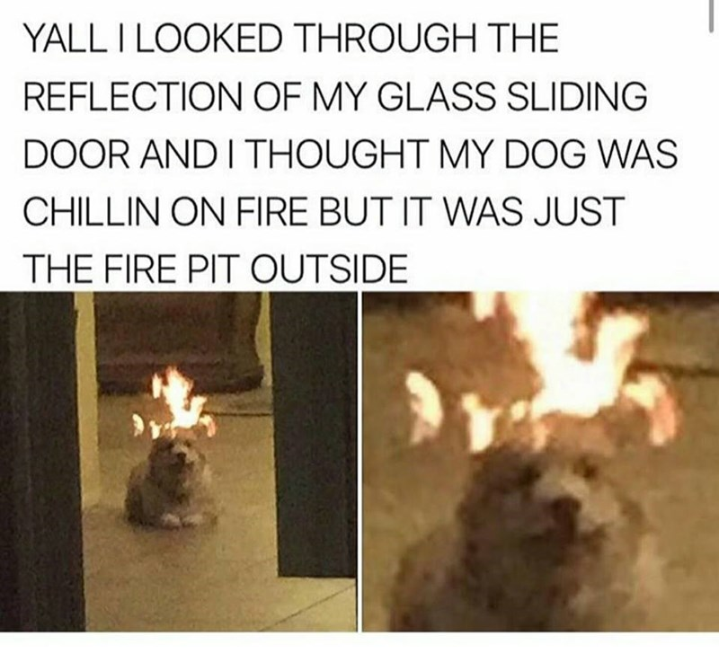 fine this is fine fire dog irl