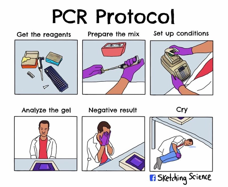 Line - PCR Protocol Set up conditions Get the reagents Prepare the mix Cry Analyze the gel Negative result A Sketching Science