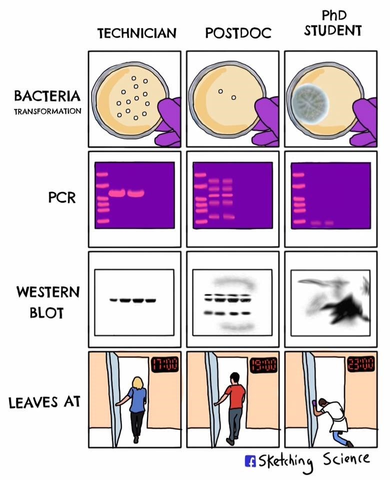 Text - PhD STUDENT POSTDOC TECHNICIAN BACTERIA TRANSFORMATION PCR WESTERN BLOT C30 LEAVES AT ASketching Science