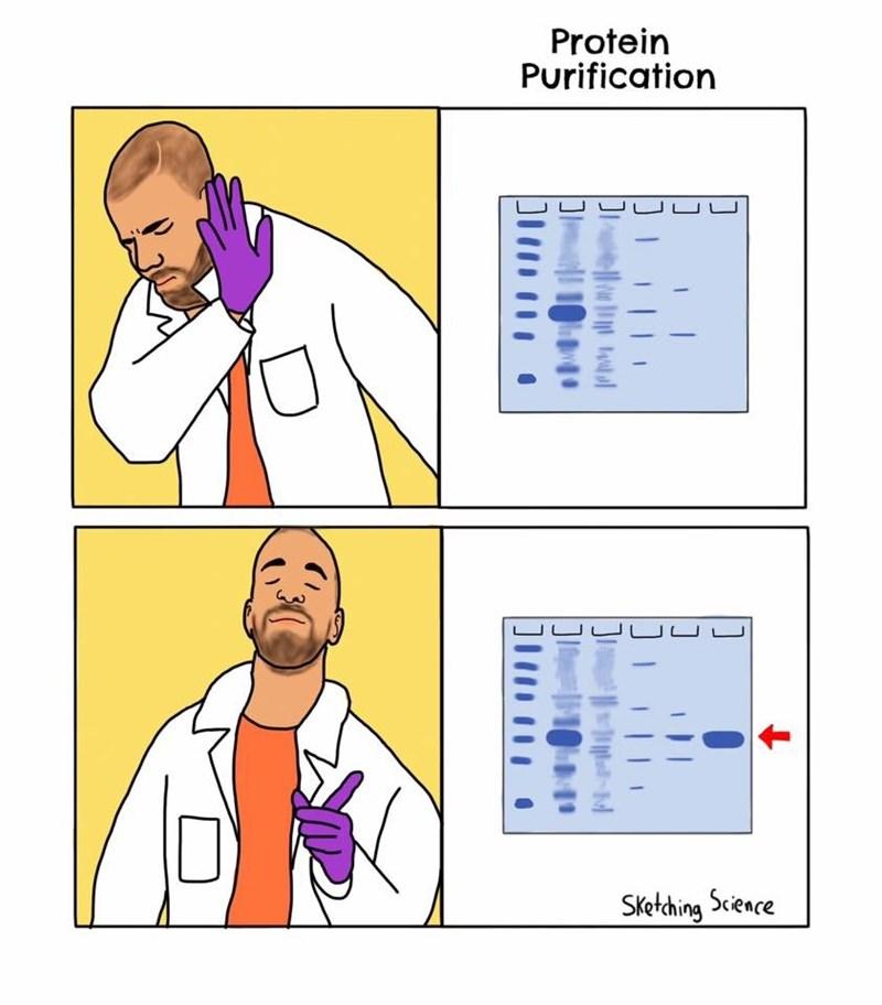 Text - Protein Purification UUUU UU UUJLUUJ Sketching Scieace