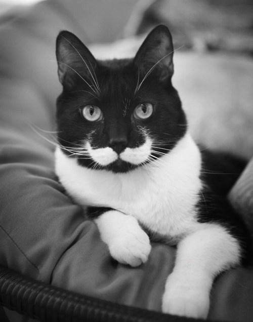 Cats,mustache