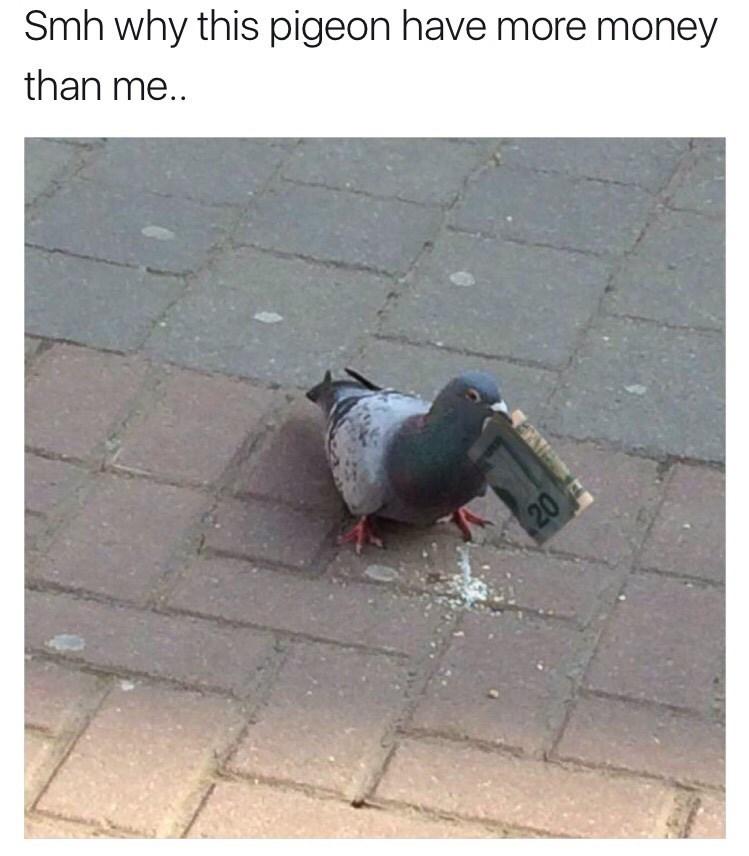 pigeon money image - 8990729728