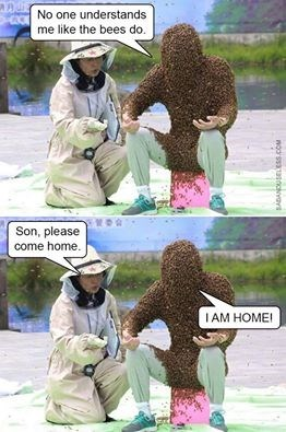 wtf bees image - 8990734336