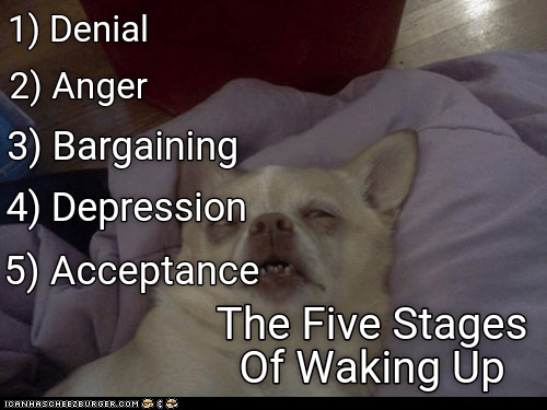 dogs anger acceptance bargaining denial depression caption