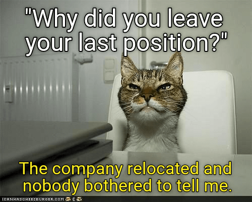 relocation hired job interview cat memes - 8990825472