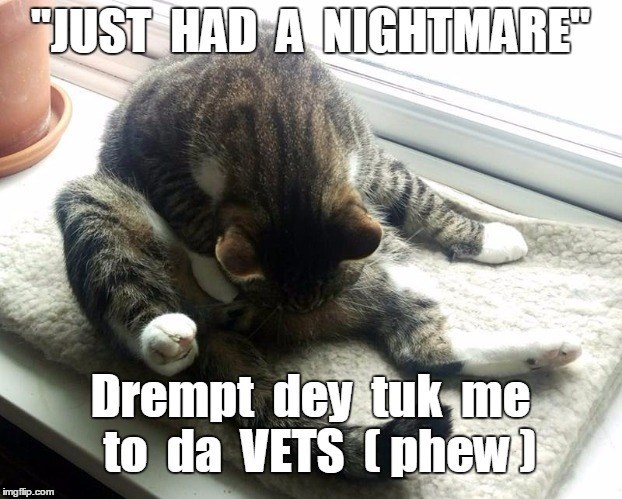 cat took me dreamt nightmare caption vets - 8990930432
