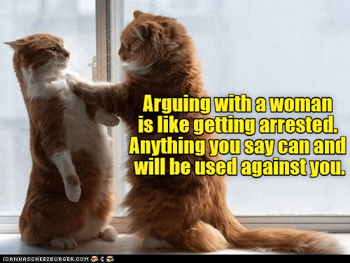 like arguing wonder woman arrested caption Cats getting