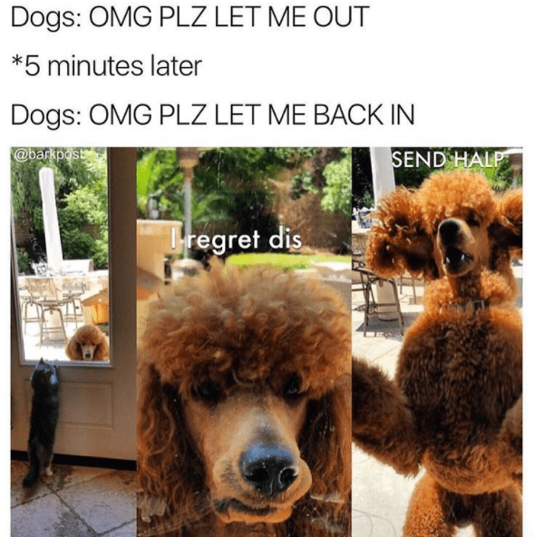 let me in dog meme