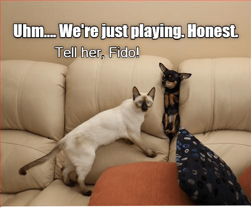 cat honest dogs just caption playing - 8990974464