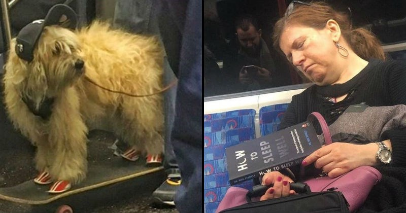 weird things on public transport like a dog wearing sneakers and a sleeping woman reading a book about sleeping