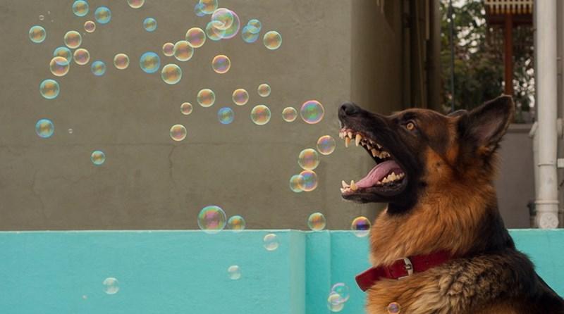 bubbles - 8991031296