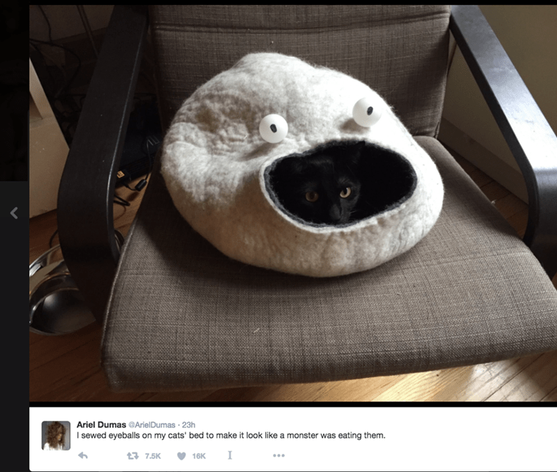 colbert writer put eyeballs on cat bed its great