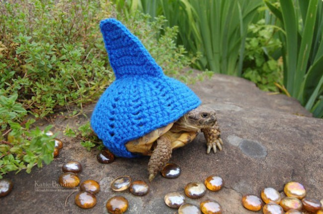 tortoise in shark costume