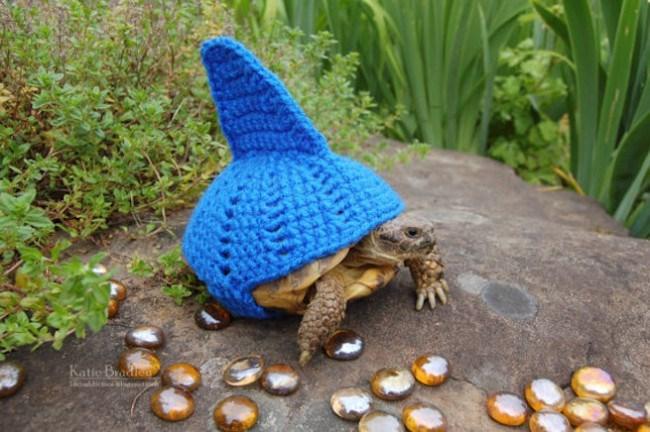 tortoise in shark costume