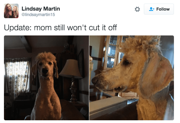 Dog - Lindsay Martin @lindsaymartin15 Follow Update: mom still won't cut it off