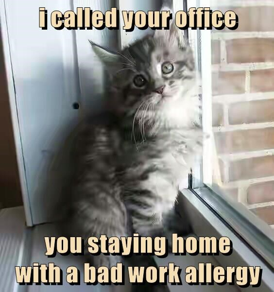 i called your office  you staying home                                         with a bad work allergy