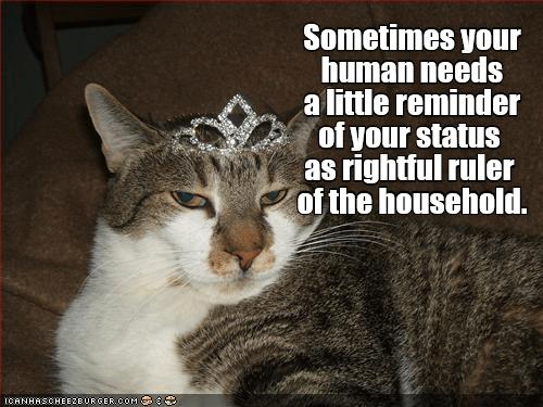 needs cat ruler household human reminder caption status - 8991334656