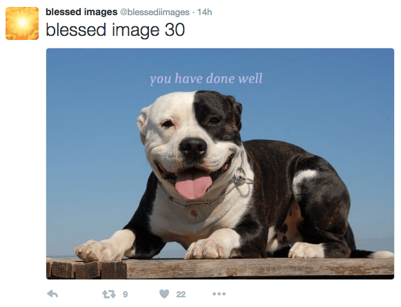 Dog - blessed images @blessedimages 14h blessed image 30 you have done well 22