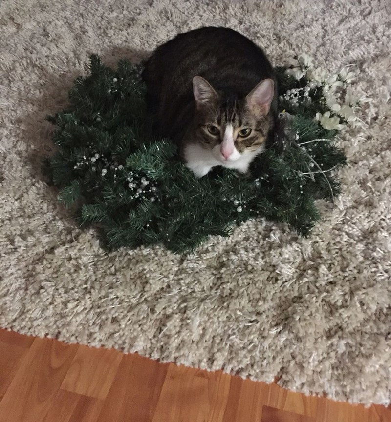 christmas wreath Cats - 8991466496