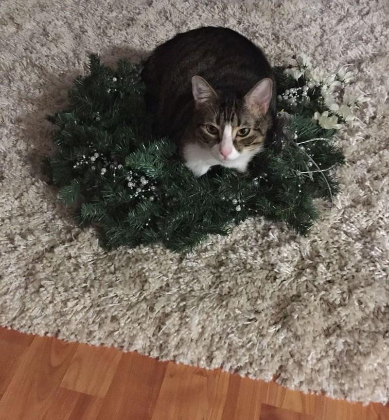 christmas wreath Cats - 8991466496