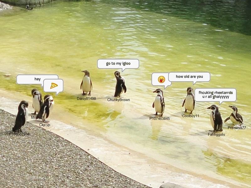 penguins club penguin Memes - 8991491072
