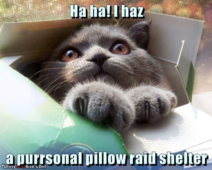 Ha ha! I haz  a purrsonal pillow raid shelter