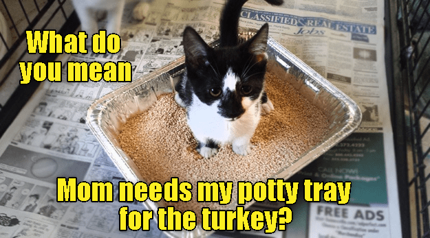 Thanksgiving at the crazy cat lady's house