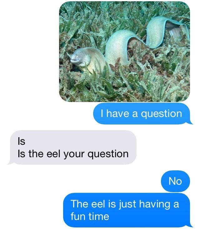 wtf,text,eels