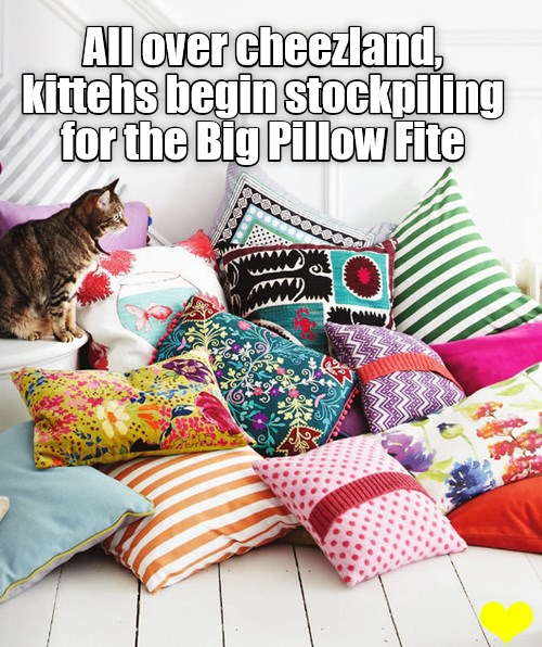 Pillow Fite!