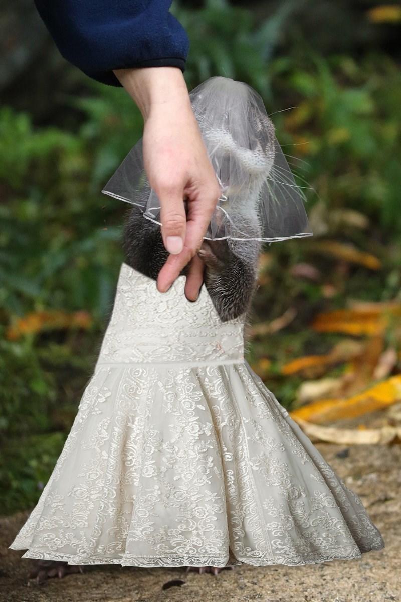 Wedding dress - ale