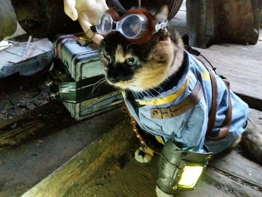 this-radioactive-kitty-is-off-to-find-his-son