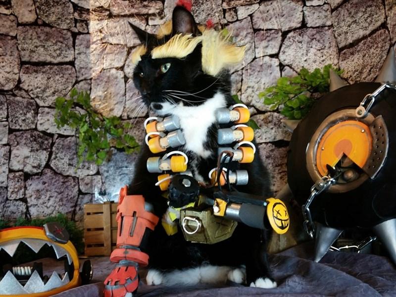 junk-cat