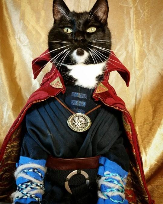 dr-strangecat