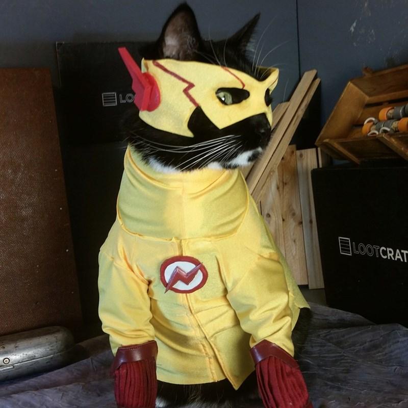 kid-flashcat