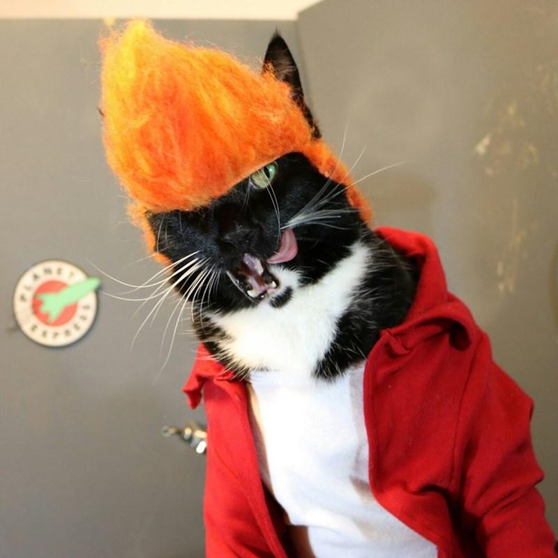 philip-j-cat