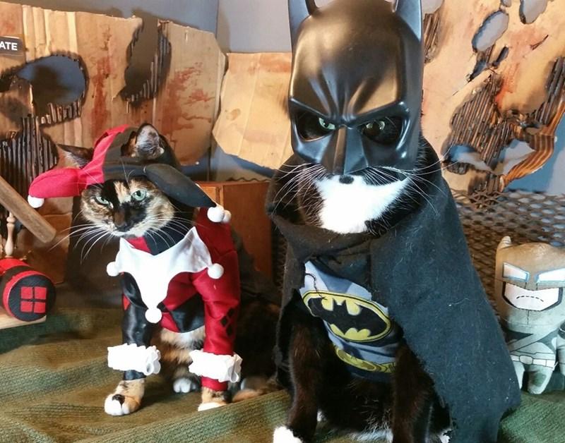 batcat-and-harley-feline