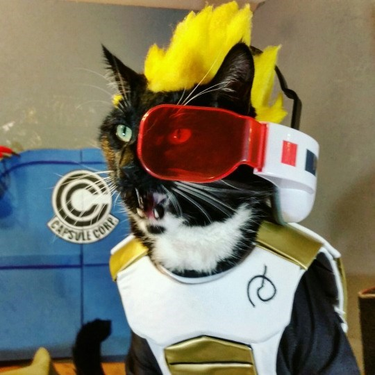 vegeta-purrince-of-the-saiyans