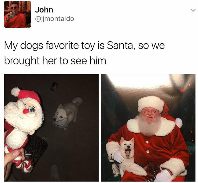 dog loves santa tweet