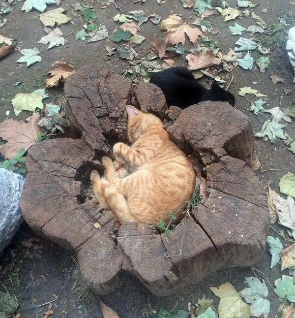 cat fits like a glove