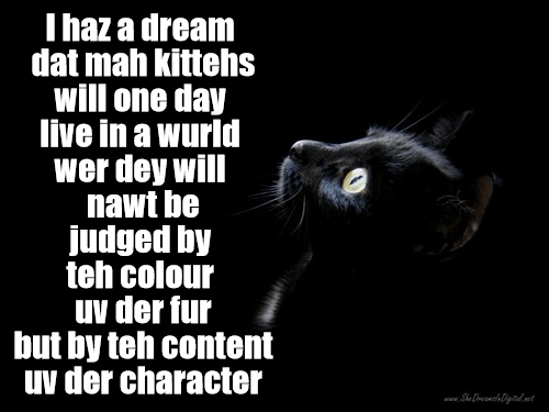 Black kittehs haz dreamz