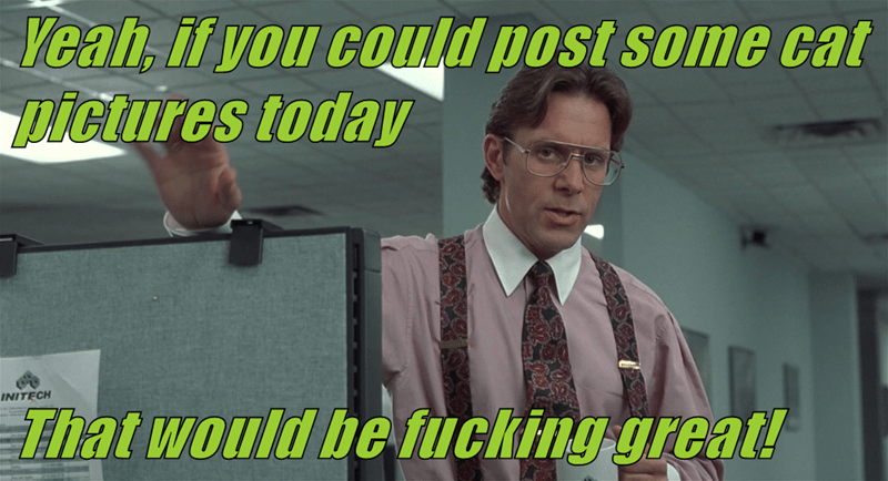 Yeah, if you could post some cat pictures today   That would be fucking great!