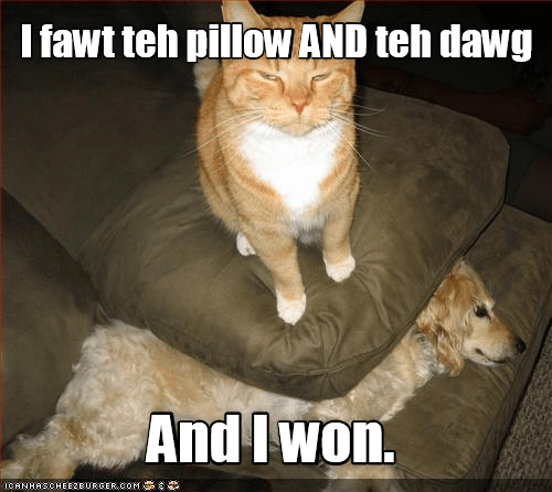 Pillow cat dogs won fought caption - 8992393984