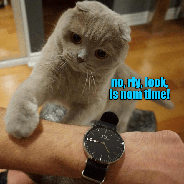 cat,time,nom,look,caption