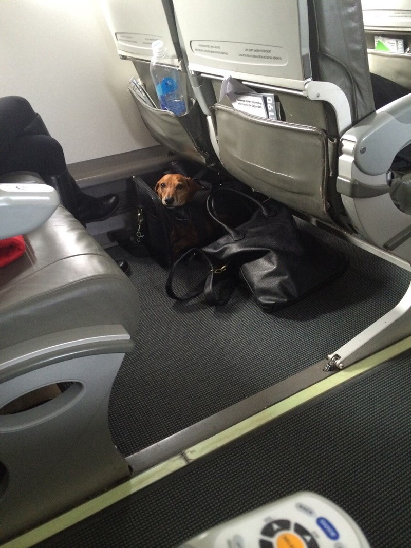 hidden dog on plane