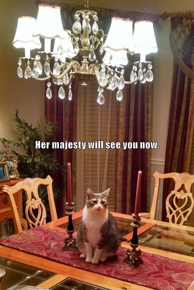 cat her see majesty now caption - 8992661248