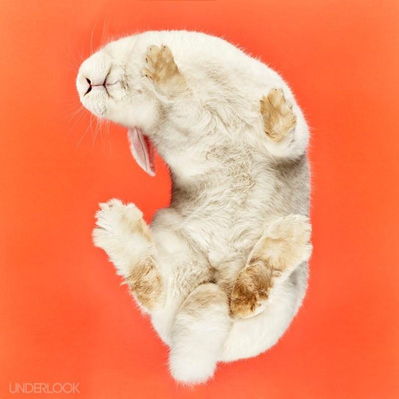 underbelly,bunnies,Fluffy,belly,rabbits
