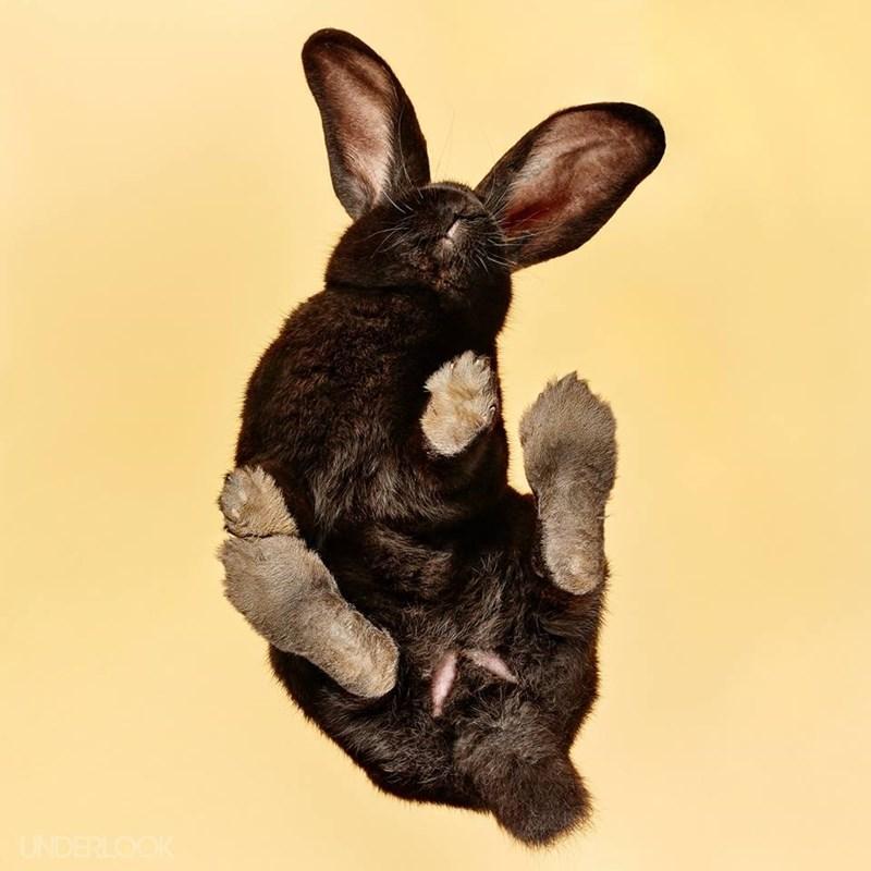 Rabbit - UNDERLOOK